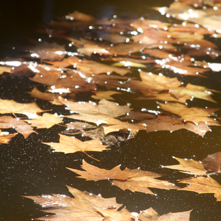 Leaves away from home, Canon EOS 7D, Canon EF 28-135mm f/3.5-5.6 IS
