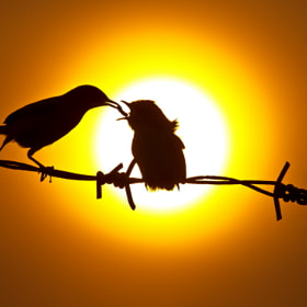 Silhouette by SIJANTO NATURE (yanen31)) on 500px.com