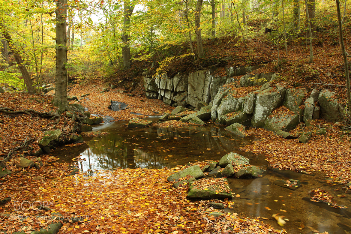 Photograph Flowing Leaves by Kenneth  Maurer on 500px