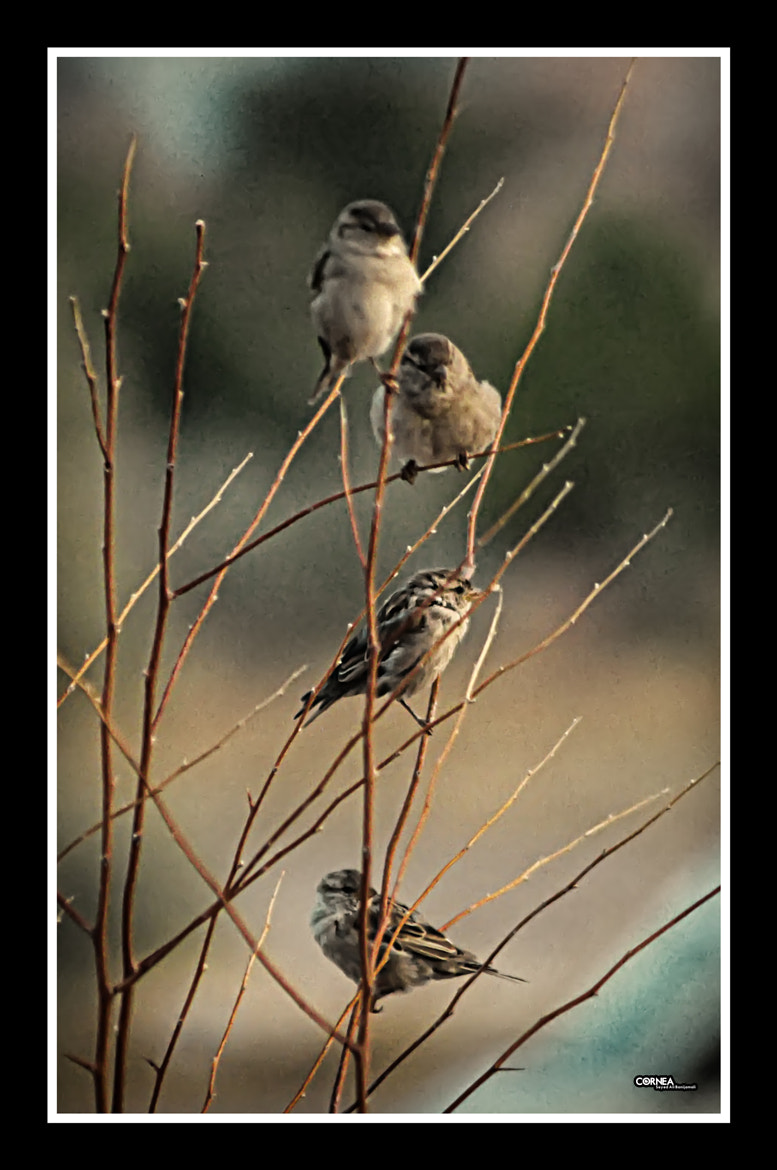 Photograph 4 Birds by Ali Banijamali on 500px
