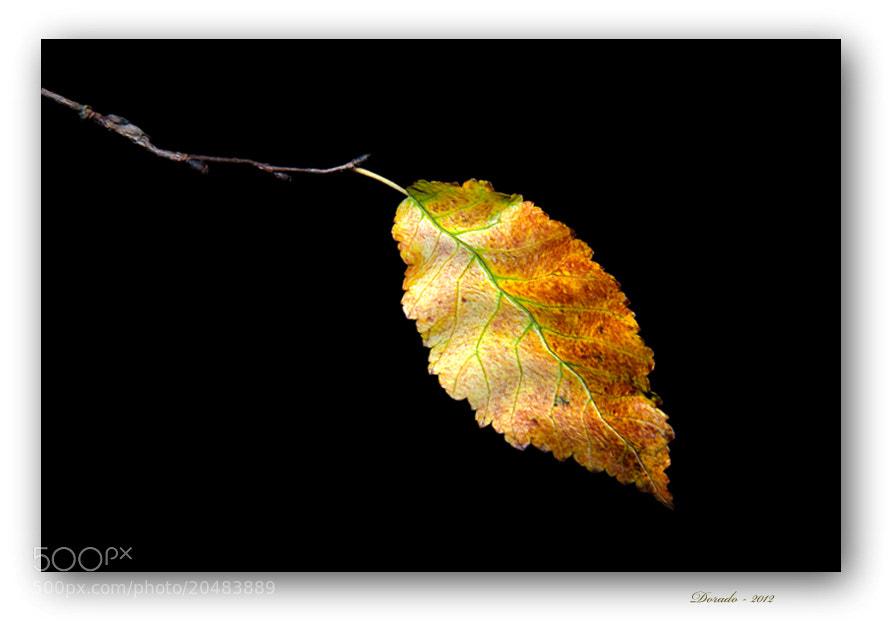 Photograph Autumn magic LXXV by Juan Dorado on 500px
