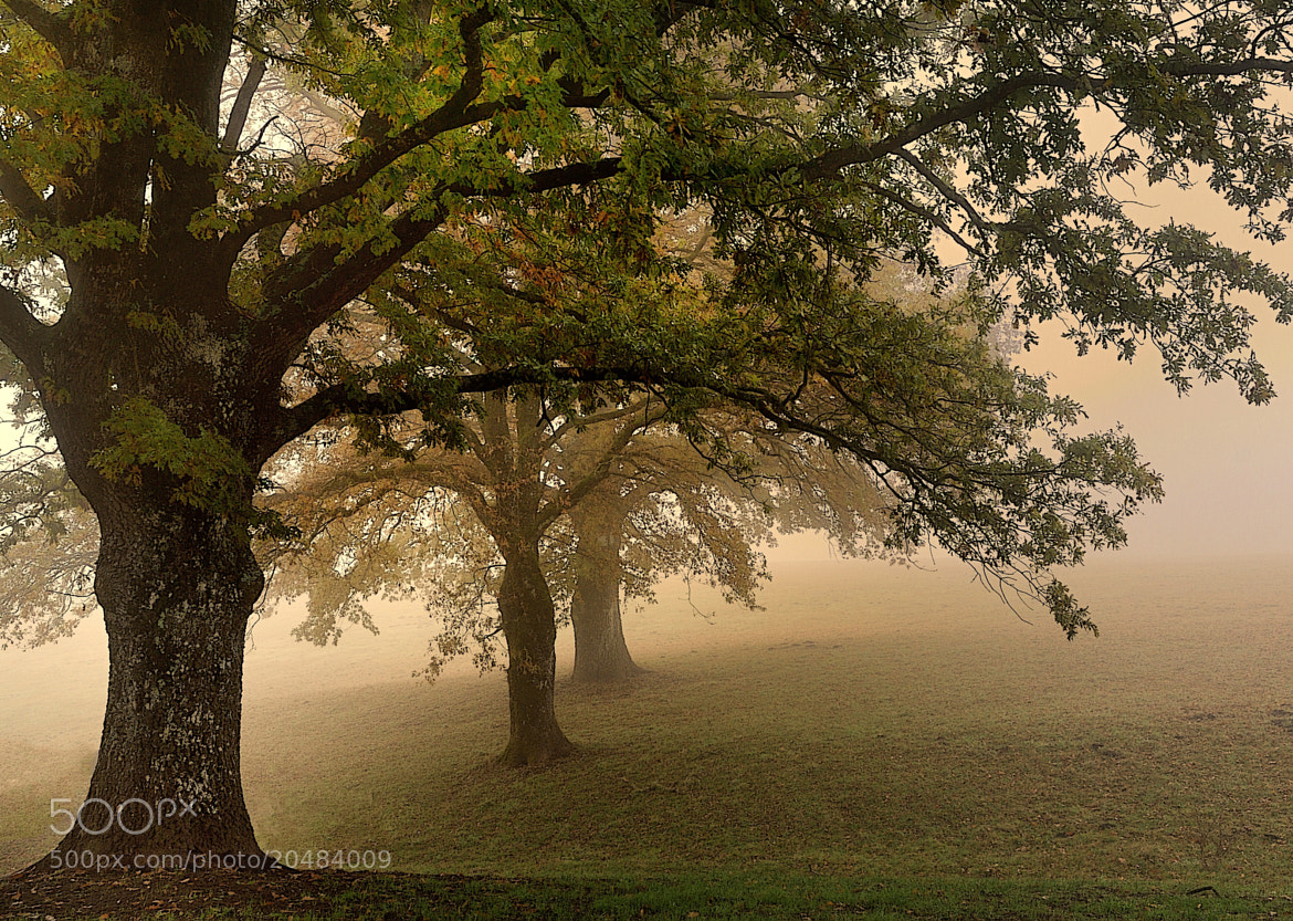 Photograph the oaks by mauro maione on 500px