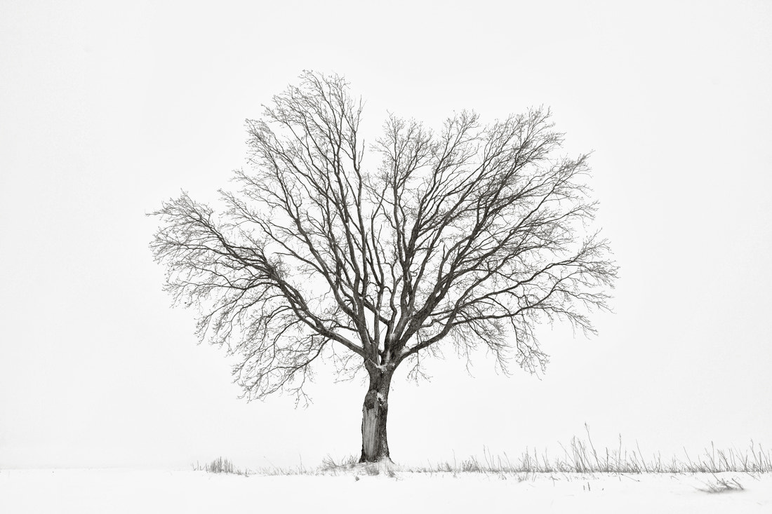 Photograph winter tree by Dominik Fras on 500px