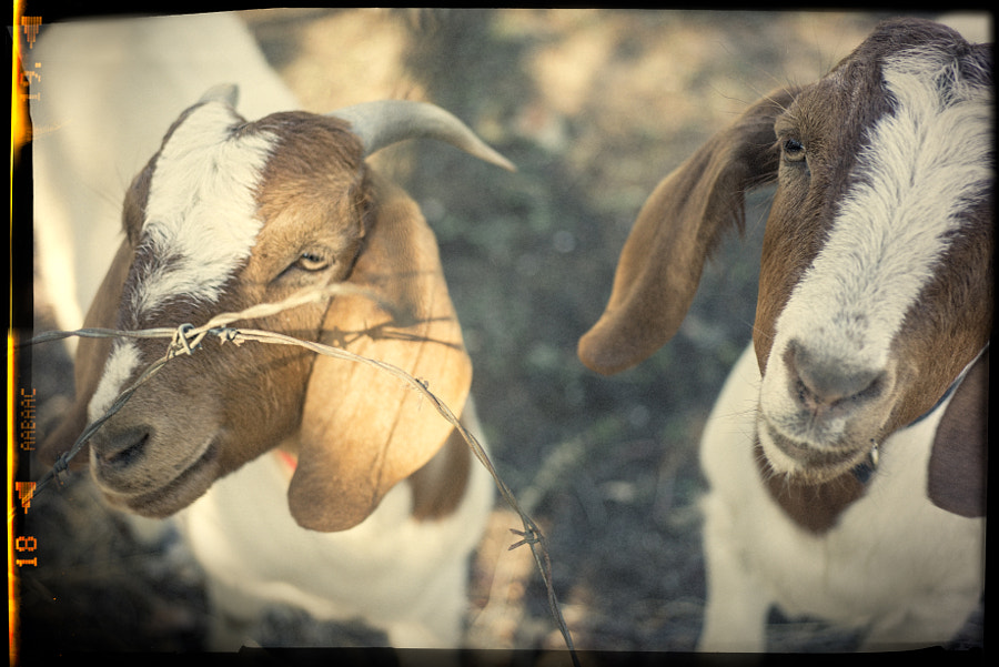 Kidding About by Paul Amyes on 500px.com