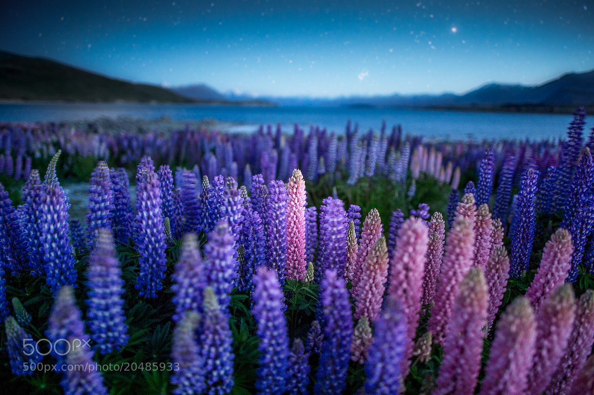Photograph NZ summer by Coolbiere. A. on 500px