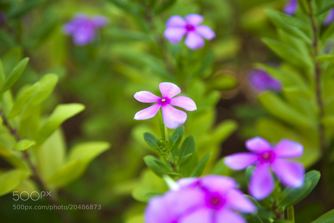 Photograph Flower by QiFeng Gao on 500px