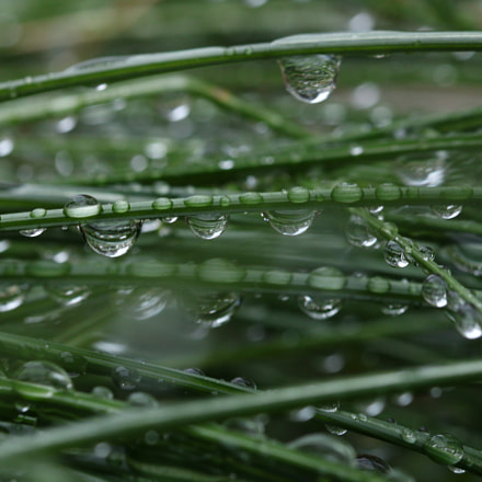 Beautiful water drops, Canon EOS 8000D, Canon EF 100mm f/2.8L Macro IS USM