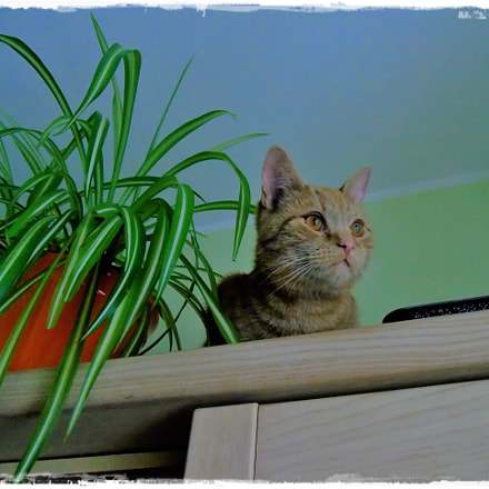 Cat's perspective, Sony DSC-H400