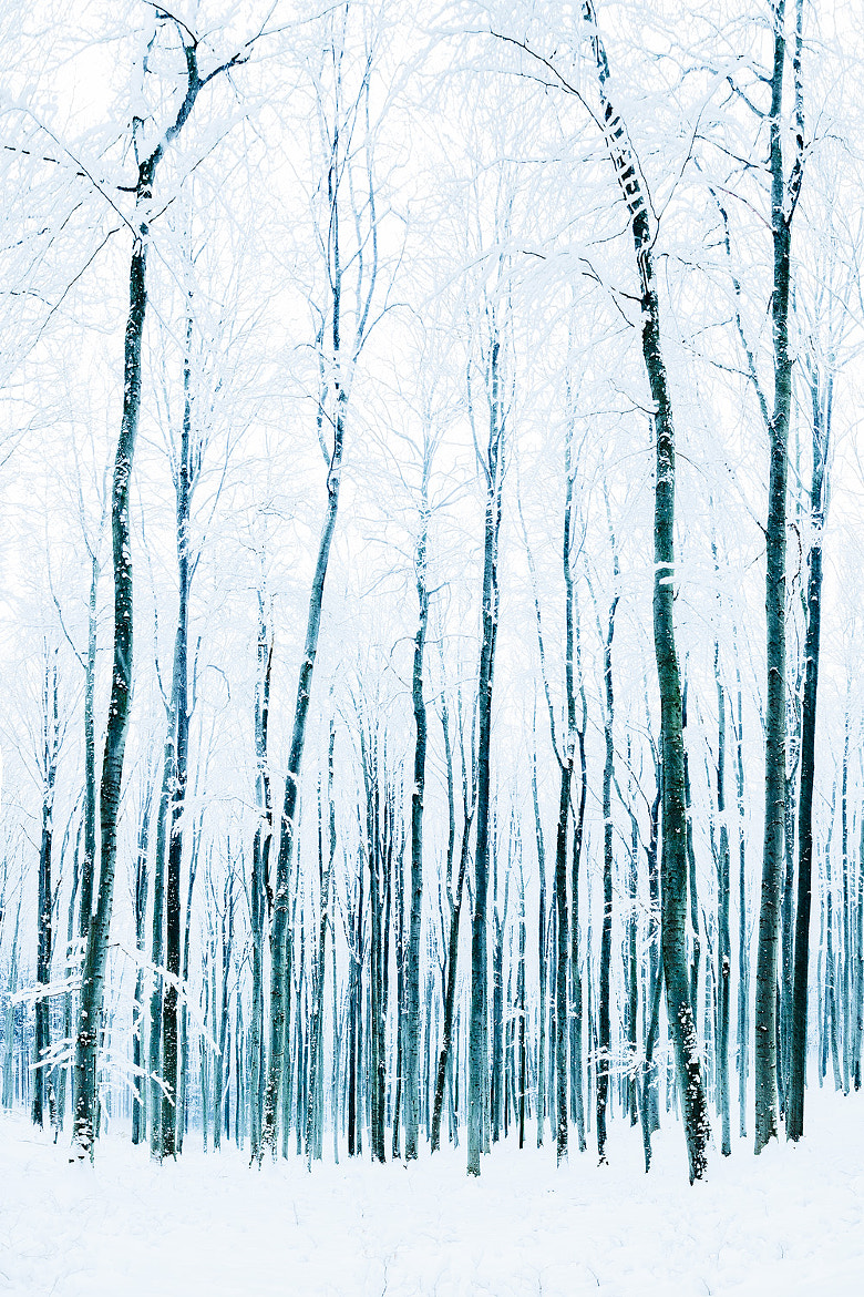 Photograph Cold Blue by Felix Zaussinger on 500px