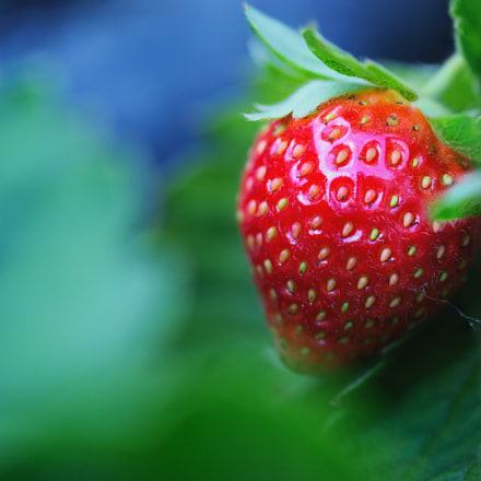 Very, Strawberry, Nikon D600, AF Micro-Nikkor 105mm f/2.8