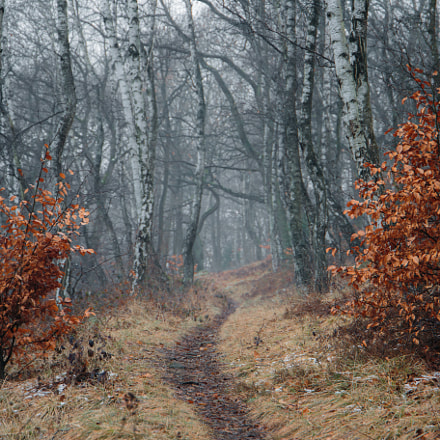 Two trees by the, Canon EOS 6D, Canon EF 24-105mm f/3.5-5.6 IS STM