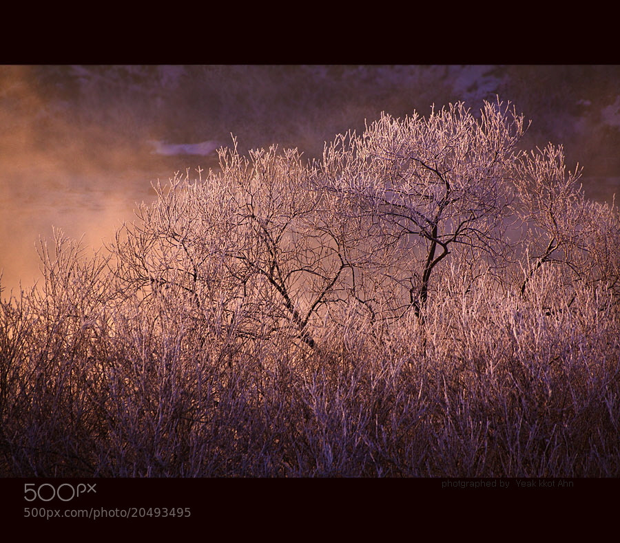 Photograph hoarfrost on the tree by Yeak Kkot Ahn on 500px