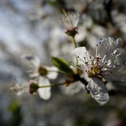 Finally spring in Belgium, Canon EOS M5, Canon EF-M 28mm f/3.5 Macro IS STM