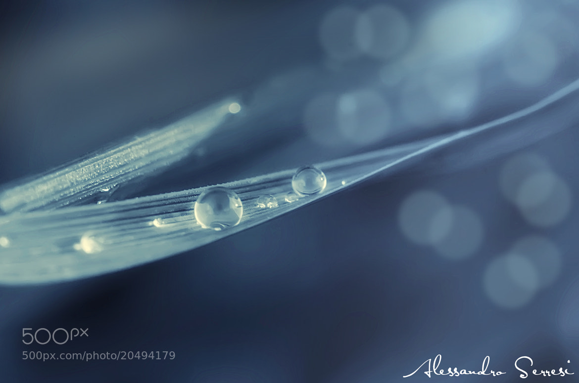 Photograph DROPS by Alessandro Serresi on 500px