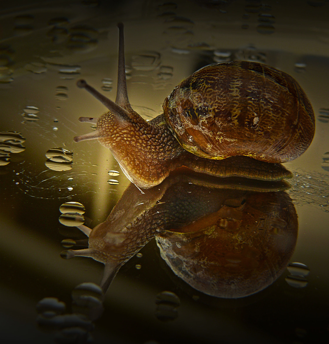 Photograph Snail by Josie Jackson on 500px
