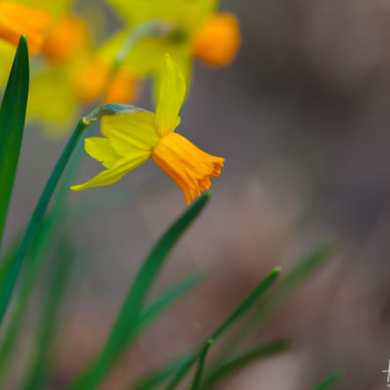 spring flowers, Canon EOS 5D MARK II, Canon EF 100mm f/2 USM
