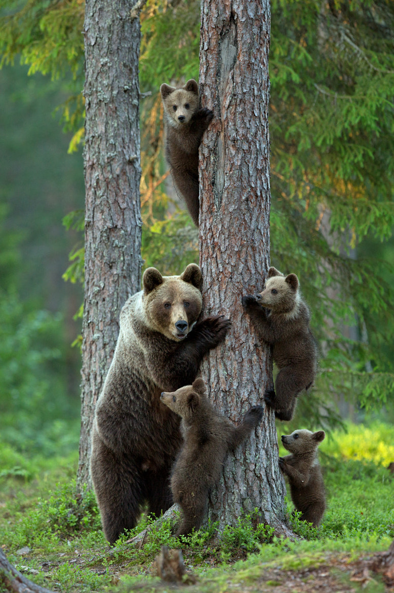 Photograph family by Lauri Tammik on 500px
