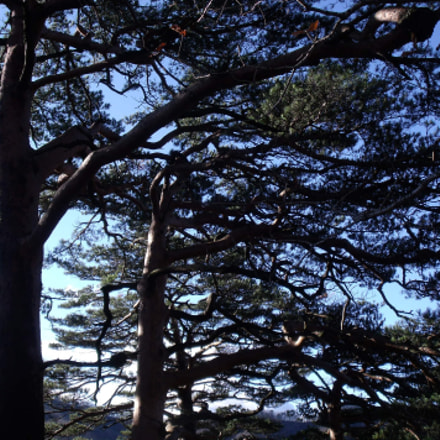 Pine Trees On The, Fujifilm FinePix J110W