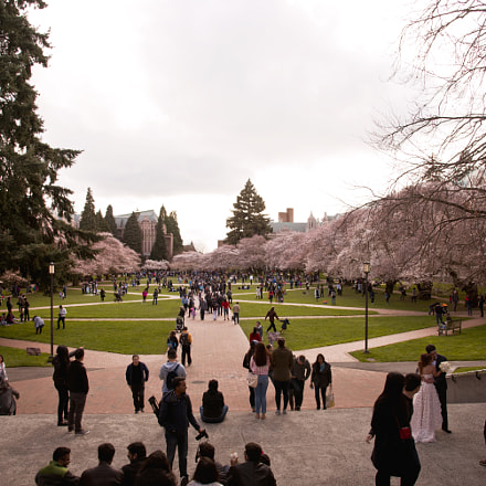 Cherry Blossom in UW, Nikon D750, IX-Nikkor 30-60mm f/4-5.6