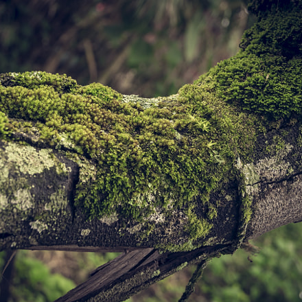 old nature, Sony SLT-A58, Sony DT 18-55mm F3.5-5.6 SAM II (SAL18552)