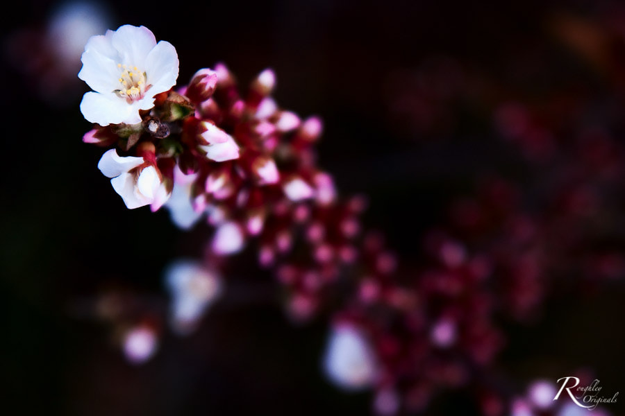 Photograph Spring Bloom by Roughley Originals on 500px