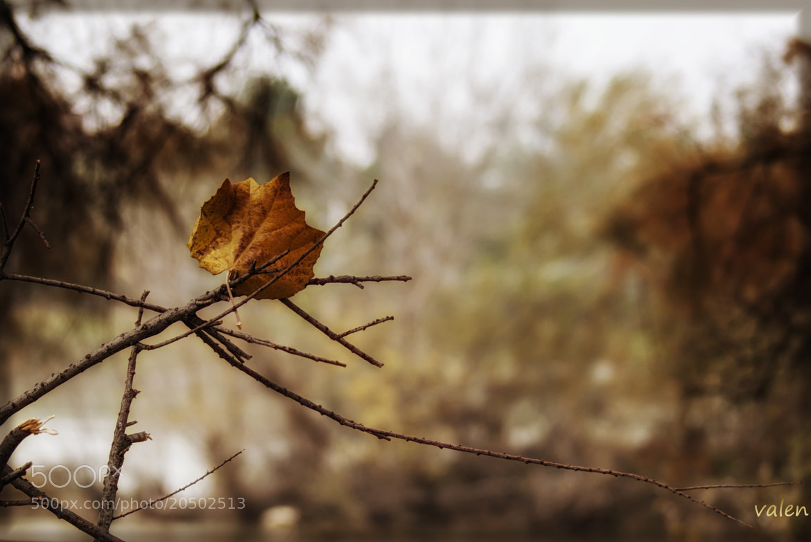 Photograph otoño by Valentina Alexe on 500px