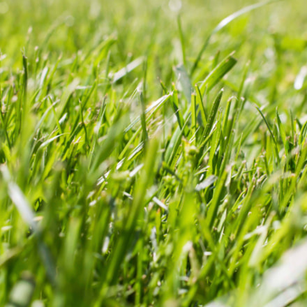 Grass, Canon EOS KISS X6I, Canon EF 40mm f/2.8 STM