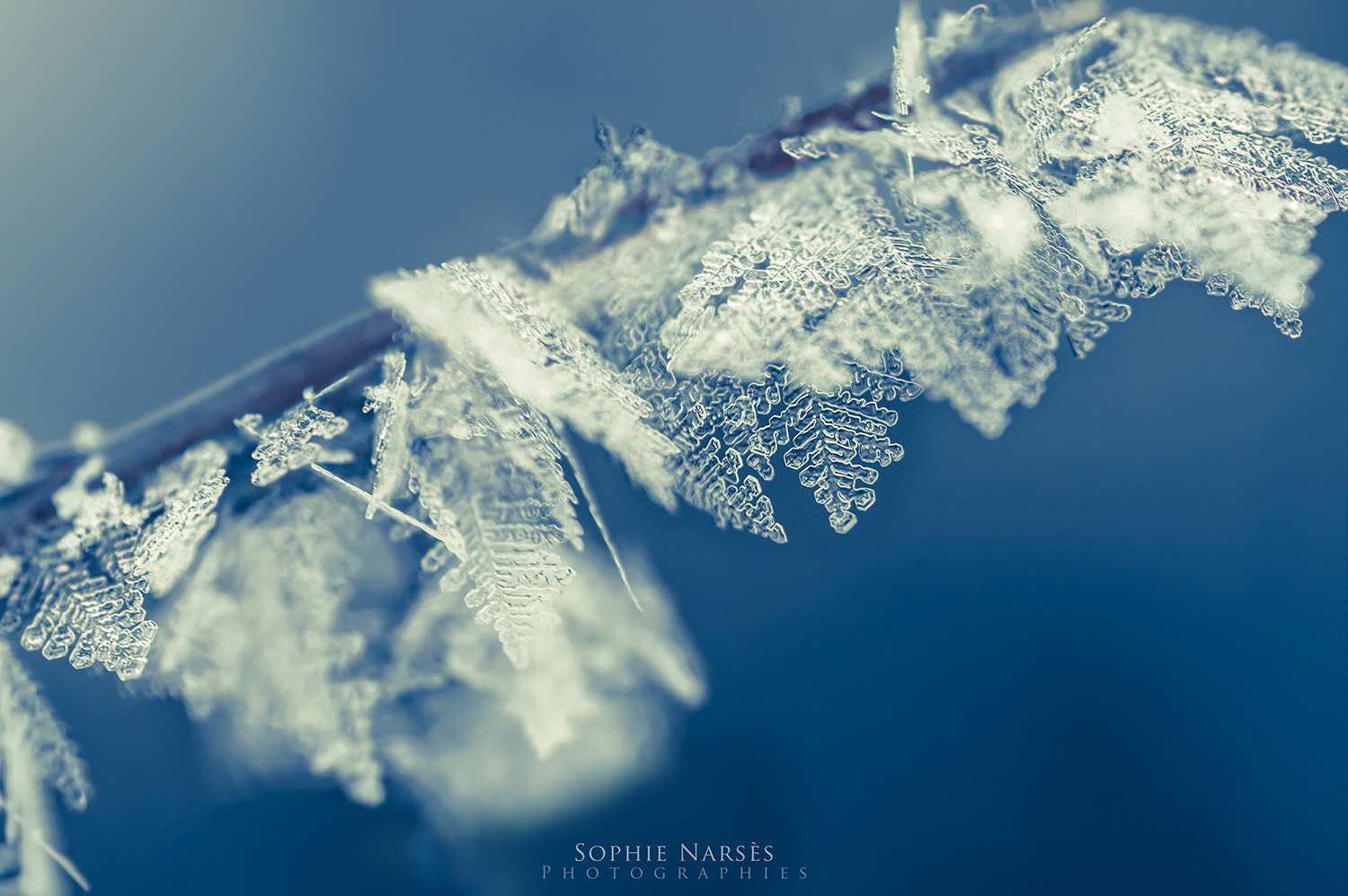 Photograph Frozen Dreams by Sophie Narses on 500px