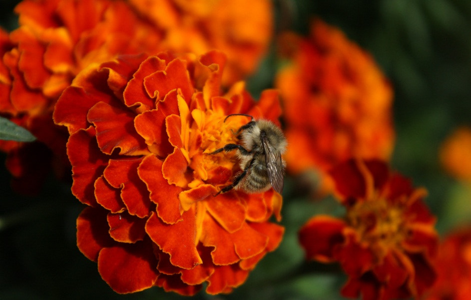 Photograph Flowers and insects by Igor Matievskiy on 500px