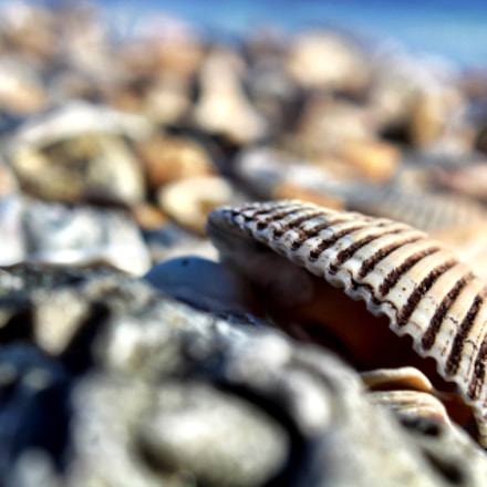 Shells up close, Canon EOS REBEL T6, Canon EF-S18-55mm f/3.5-5.6 IS II