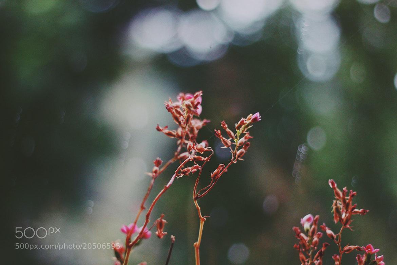 Photograph rainy day by Damla Özcan on 500px
