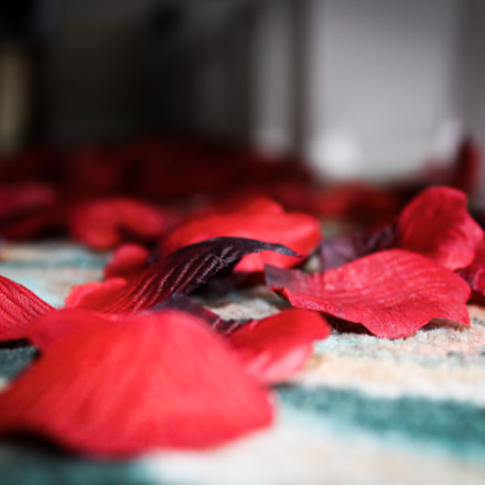 Rose petals at my, Canon EOS REBEL T6, Canon EF-S 18-55mm f/3.5-5.6 IS II