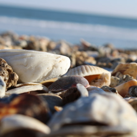 Shells, Canon EOS REBEL T6, Canon EF-S 18-55mm f/3.5-5.6 IS II