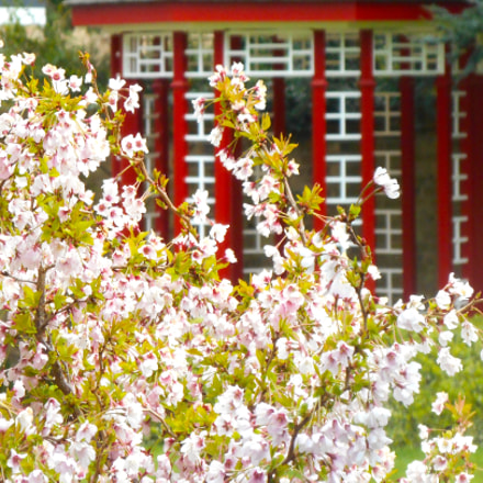 Blossom in Chinese garden, Nikon COOLPIX S3400