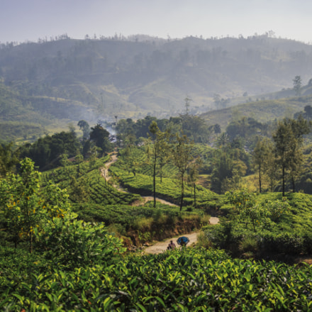 Mountains of Tea, Nuwara, Canon EOS 600D, Canon EF-S 18-200mm f/3.5-5.6 IS
