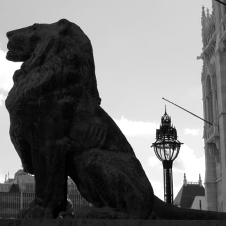 Lion, Canon POWERSHOT A3100 IS