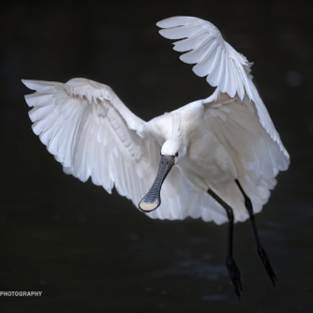 Glide, Canon EOS-1D X, Canon EF 300mm f/2.8L IS