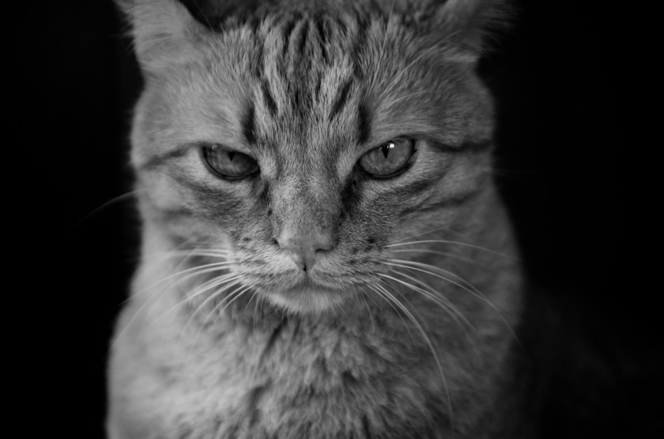 Photograph You're talking to me? by Mat Hieu on 500px