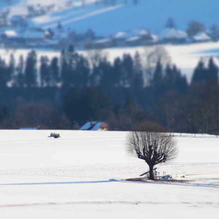 Tree in the snow, Canon EOS 700D, Canon EF 75-300mm f/4-5.6
