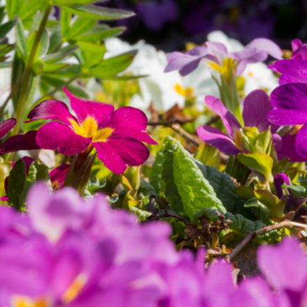 the colors of spring, Canon EOS 700D, Canon EF-S 55-250mm f/4-5.6 IS STM