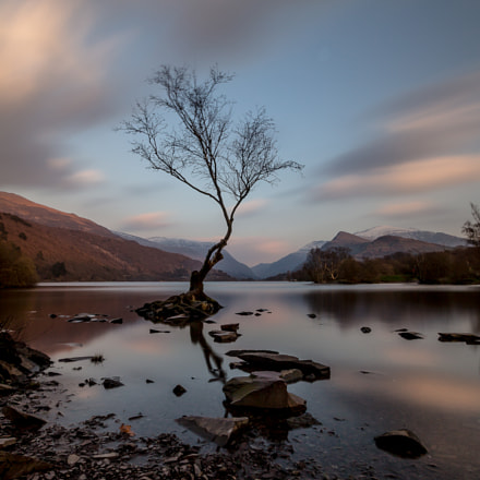 Lonely Tree, Llanberis, Canon EOS 700D