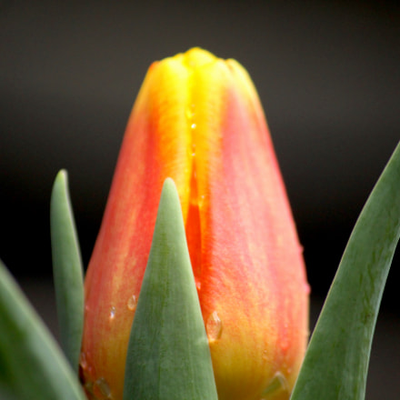 Macro_Lens, Canon EOS REBEL T5I, Canon EF-S 55-250mm f/4-5.6 IS