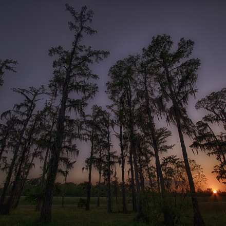 Hwy 61 Cypress, Canon EOS REBEL T6I, Canon EF-S 10-22mm f/3.5-4.5 USM