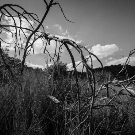 Sticks and Skies, Canon EOS 7D, Sigma 10-20mm f/4-5.6