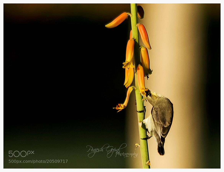 Photograph Honey time....!!! by Prajesh Gopal on 500px