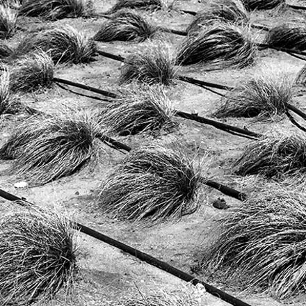 Wigs, Canon EOS 450D, Canon EF-S 18-55mm f/3.5-5.6 IS