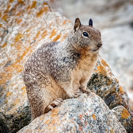Squirrel on the Rocks, Canon EOS 40D, Canon EF 70-300mm f/4-5.6 IS USM