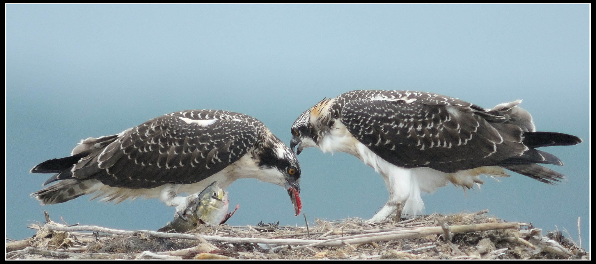 """Photograph """"I Think Mom Expects You to Share."""" by Mark Schwall on 500px"""