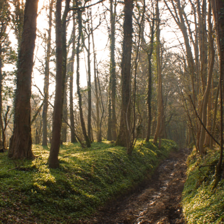 Toadsmoor Woods, Sony SLT-A65V, Minolta/Sony AF DT 18-70mm F3.5-5.6 (D)