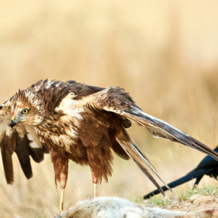 Bad day, Canon EOS 5D MARK III, Canon EF 500mm f/4L IS